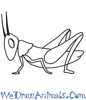 How to Draw a Realistic Grasshopper in 9 Easy Steps