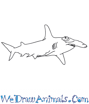 How to Draw a Realistic Hammerhead Shark in 7 Easy Steps