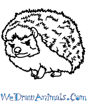How to Draw a Realistic Hedgehog in 7 Easy Steps