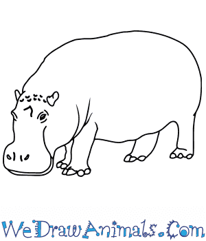 How to Draw a Realistic Hippopotamus in 8 Easy Steps