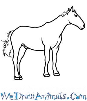 How to Draw a Realistic Horse in 8 Easy Steps
