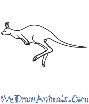 How to Draw a Realistic Kangaroo in 7 Easy Steps