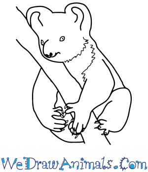 How to Draw a Realistic Koala in 8 Easy Steps