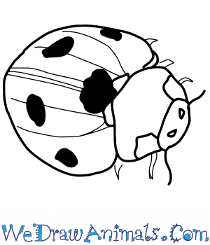 How to Draw a Realistic Ladybug in 8 Easy Steps