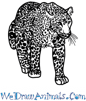 How to Draw a Realistic Leopard in 8 Easy Steps