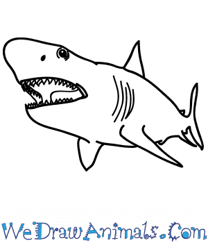 How to Draw a Realistic Megalodon Shark in 6 Easy Steps