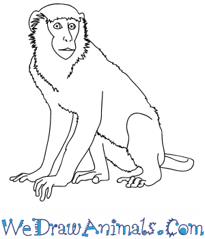 How to Draw a Realistic Monkey in 9 Easy Steps
