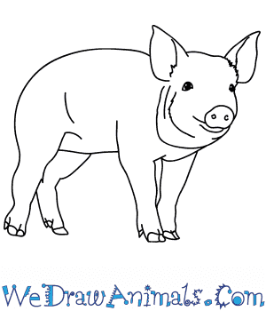 How to Draw a Realistic Pig in 7 Easy Steps