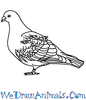 How to Draw a Realistic Pigeon in 5 Easy Steps