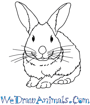 How to Draw a Realistic Rabbit in 7 Easy Steps