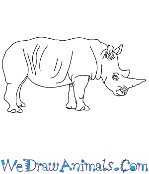 How to Draw a Realistic Rhino in 7 Easy Steps