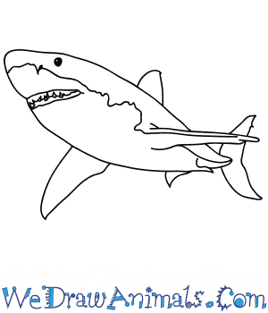 How to Draw a Realistic Shark in 7 Easy Steps