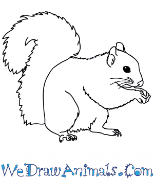 How to Draw a Realistic Squirrel in 8 Easy Steps
