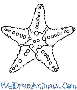 How to Draw a Realistic Starfish in 7 Easy Steps