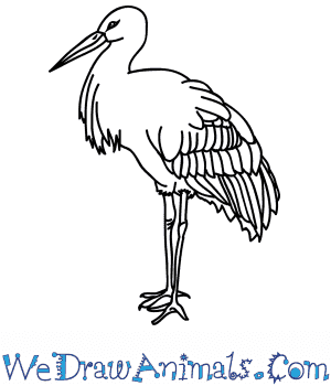 How to Draw a Realistic Stork in 8 Easy Steps