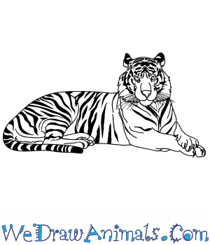 How to Draw a Realistic Tiger in 8 Easy Steps