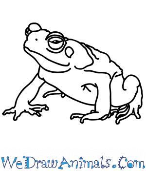 How to Draw a Realistic Toad in 5 Easy Steps