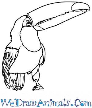 How to Draw a Realistic Toucan in 7 Easy Steps