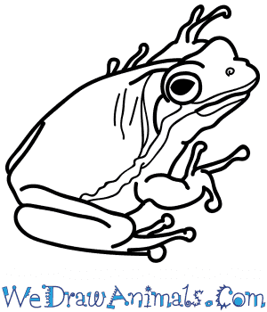 How to Draw a Realistic Tree Frog in 6 Easy Steps