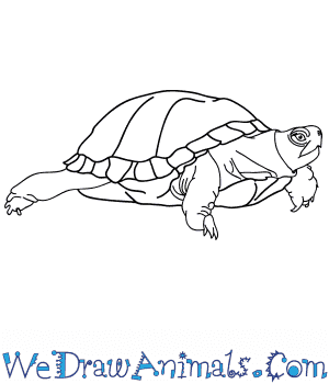 How to Draw a Realistic Turtle in 6 Easy Steps