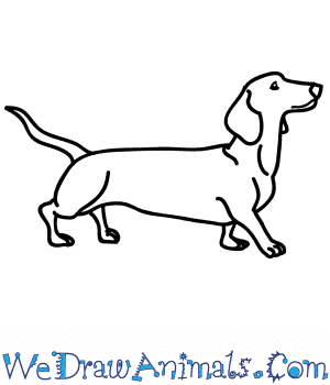 How to Draw a Realistic Wiener Dog in 7 Easy Steps