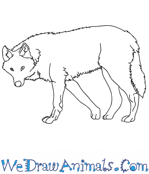 How to Draw a Realistic Wolf in 8 Easy Steps