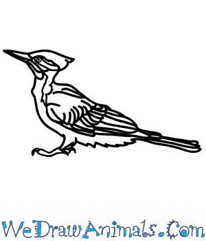 How to Draw a Realistic Woodpecker in 7 Easy Steps