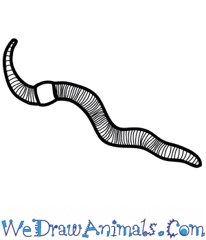 How to Draw a Realistic Worm in 4 Easy Steps