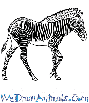 How to Draw a Realistic Zebra in 9 Easy Steps