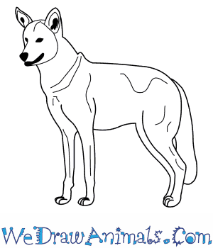 How To Draw A Red Wolf