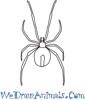 How to Draw a Redback Spider in 6 Easy Steps