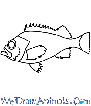 How to Draw a Redfish in 7 Easy Steps