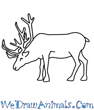How to Draw a Reindeer in 8 Easy Steps