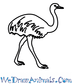 How to Draw a Rhea in 6 Easy Steps