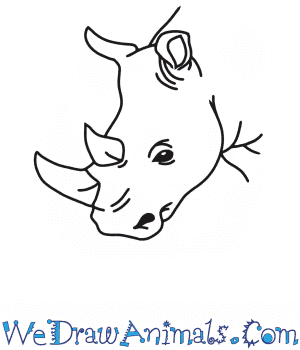 How to Draw a Rhino Head in 7 Easy Steps