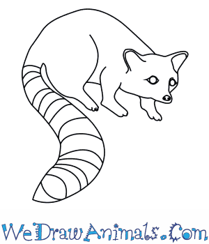 How to Draw a Ringtail in 7 Easy Steps