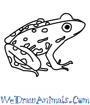 How to Draw a River Frog in 5 Easy Steps