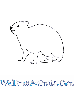 How to Draw a Rock Hyrax in 7 Easy Steps