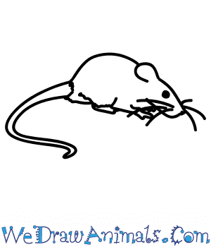 How to Draw a Rock Rat in 6 Easy Steps