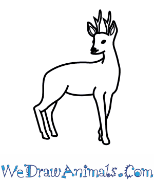 How to Draw a Roe Deer in 7 Easy Steps