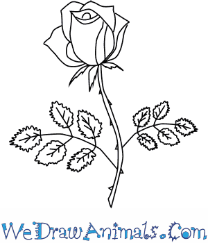 How to Draw a Rose Flower in 4 Easy Steps