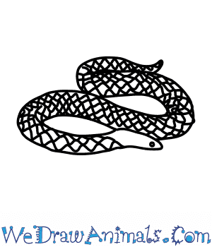 How to Draw a Rough Sided Snake in 7 Easy Steps
