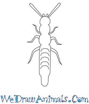 How to Draw a Rove Beetle in 7 Easy Steps