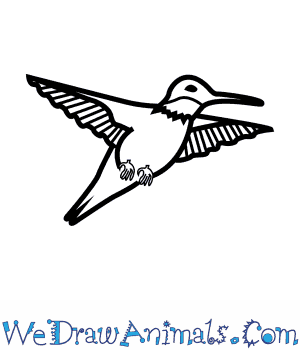 How to Draw a Ruby Throated Hummingbird in 7 Easy Steps
