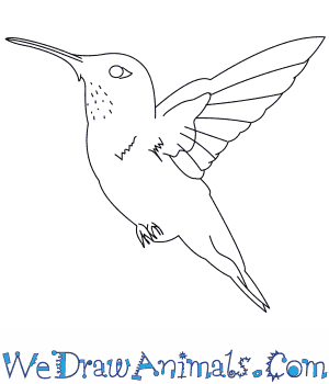How to Draw a Rufous Hummingbird in 7 Easy Steps