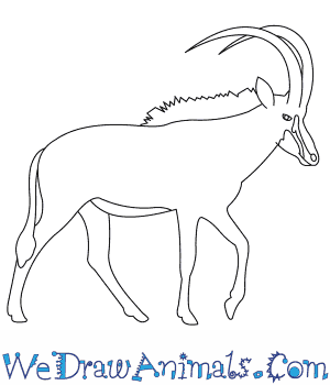 How to Draw a Sable Antelope in 7 Easy Steps