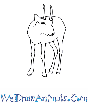 How to Draw a Saiga Antelope in 7 Easy Steps