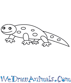How to Draw a Salamander For Kids in 6 Easy Steps