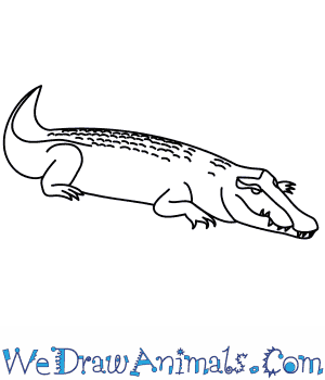 How to Draw a Saltwater Crocodile in 8 Easy Steps