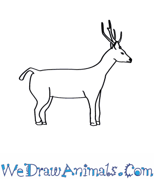 How to Draw a Sambar Deer in 7 Easy Steps
